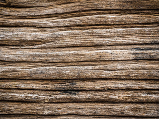 Texture of bark wood natural background