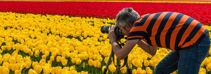 Photographer in a tulip culture, Netherland