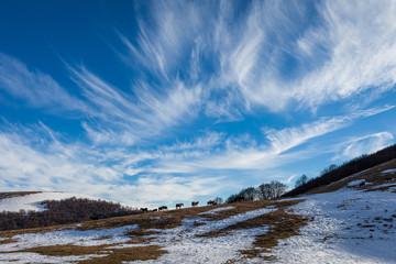 Panorama montano innevato con cavalli selvaggi all'orizzonte. Cielo con nuvole striate