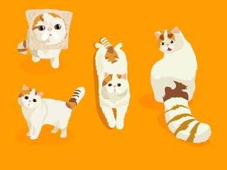 cats. stylized pets set.  Cute tabbi van cat