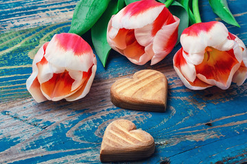 Three cut tulips