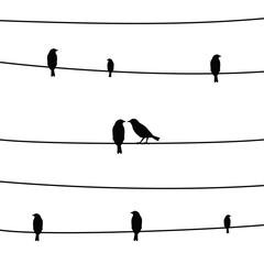 Birds on wires1