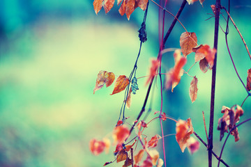 Vintage natural autumn background. Selective focus