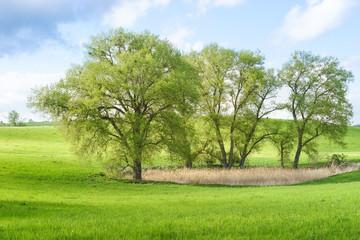 Baumgruppe in der Uckermark