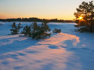 Golden light in frosty evening