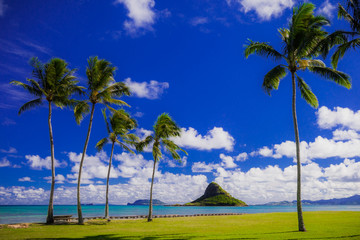 Beautiful Chinaman's Hat in Hawaii