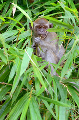 Monkey on a tree..