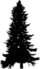 fir high tree black silhouette illustration