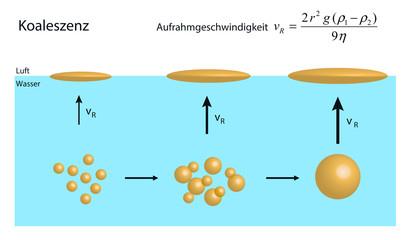 Koaleszenz von Öltröpfchen in einer Emulsion führt zu Aufrahmung