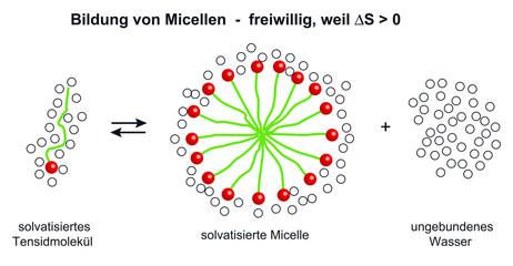 Entstehung von Micellen ist thermodynamisch begünstigt
