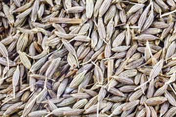 Cumin seed spice