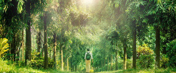 young traveler walking into deep forest in a sunny day