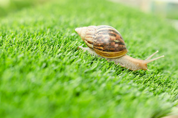 The journey of snail.