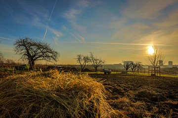 Pferdekoppel bei Mainz Drais im Sonnenaufgang