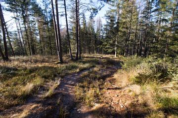 Fototapeta Wanderweg im Wald