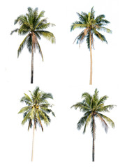 Coconut tree set isolated on white background