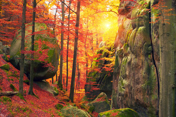 Golden colors of autumn Wall mural