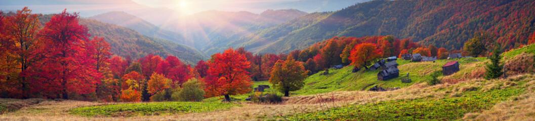 Autumn on the pasture