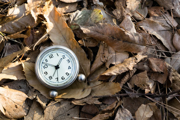 clock the fallen leaves