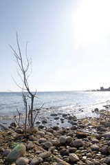 dry branch on a stony beach of Garda lake in northern Italy