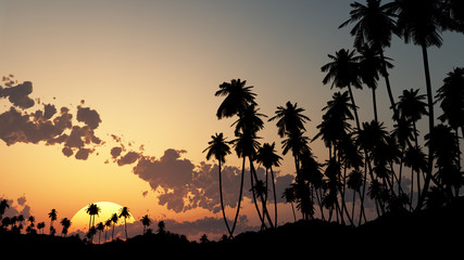 palm tree at the sunset sky