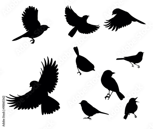 """silhouettes of birds flying and sitting on a white ..."