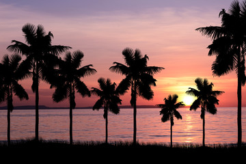 coconut trees and sunset background