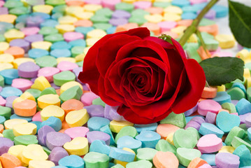 Single freshly cut red rose on colorful heart shaped candies