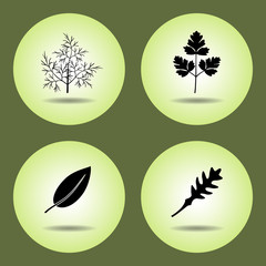 Food, herbs set. Parsley, laurel, rucola, dill icons. Black silhouette with shadow on light green background. Flat design. Vector isolated