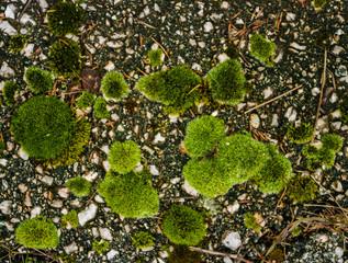 Green moss on defocused bokeh background