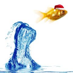 Close up view of the christmas gold fish jumping over water