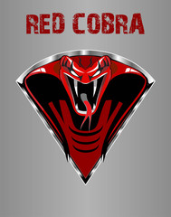 Amazing Red King Cobra
