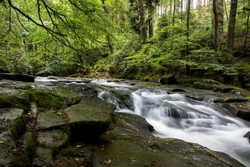 Waldfluss