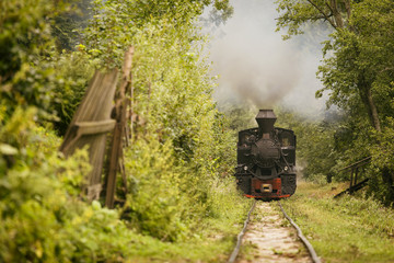 Old vintage train in green forest with big smoke