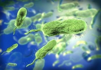 microscopic view of vibrio vulnificus bacteria