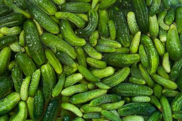 Many small ripe cucumbers