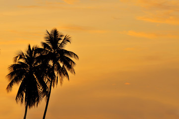 silhouette of coconut trees during beautiful sunset