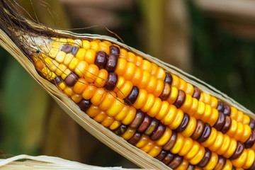 Corn,  vegetables