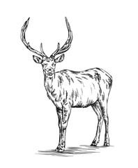 brush painting ink draw deer illustration