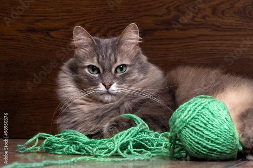 Грустные глаза у кота