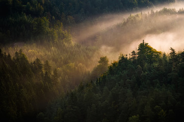 Sunrise at Bohemian Switzerland forest, Czech republic
