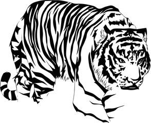 tiger walk_line art