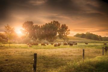 Summer farmland scene in sunset Wall mural