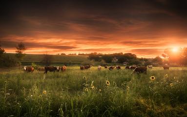 Summer farmland scene in sunset