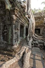 Ta Prohm temple in Siem reap , Cambodia