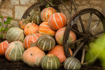 Ripe orange pumpkins stacked