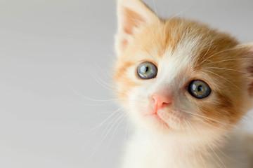 sweet look of a kitten