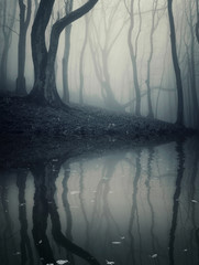 dark foggy forest reflecting in lake
