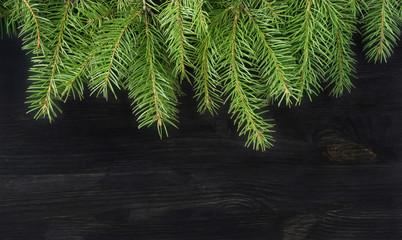 Christmas tree sprigs on dark background. Winter holidays backgr