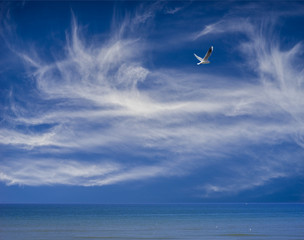 Ozean und Himmel mit Federwolken und Möwe – Freiheit